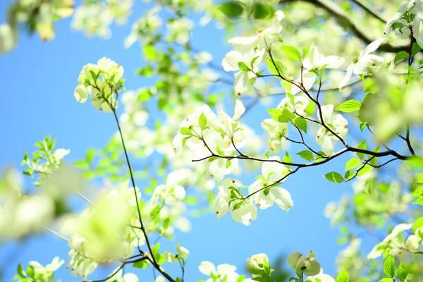花卉不同生长阶段对温度要求相同吗!