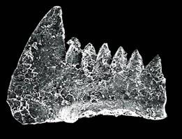 """为什么化石能做地球的""""温度计"""""""
