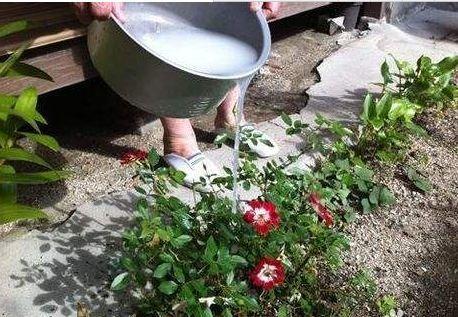 """养花""""见干见湿""""是啥意思?别理解错了,不然花卉会被浇死"""