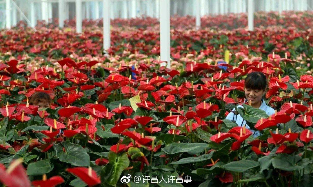 花卉种植有了科技范儿