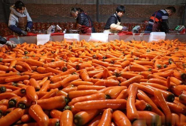 """原来方便面里面的蔬菜包,大多出自于""""这个村""""!每年产30亿包"""