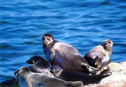 贝加尔湖淡水资源占全球20%,距海2千多公里,却为何有海洋生物?