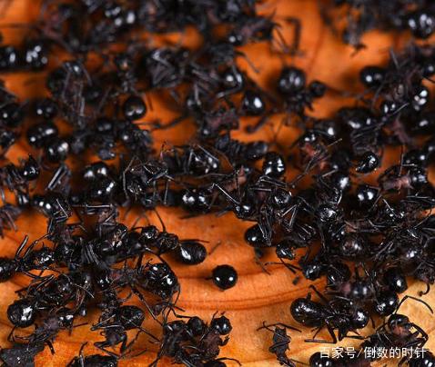 以前人们都称它们为害虫,而现在就这种害虫却一斤卖到几百元!
