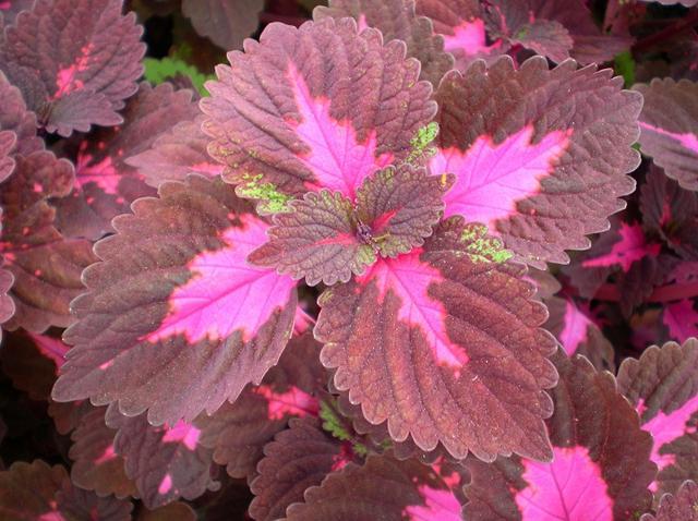 这些美上天植物,有了它,家居风格瞬间升一个档次!!