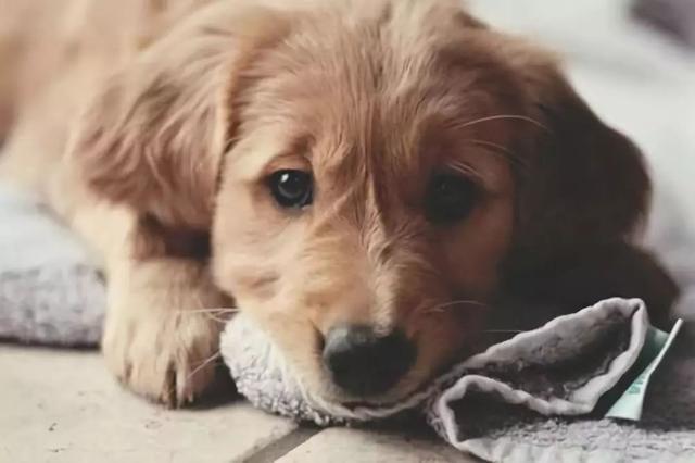 不给狗狗喝牛奶是有原因的!当然不是因为抠门……
