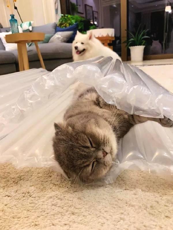 快递里拆出来的气垫,是猫快乐的源泉,无比喜欢……