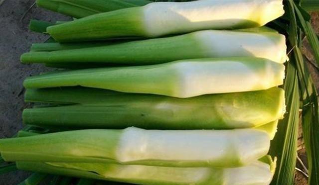 这种粮食很难长成,根茎人们常吃,却不知种子价值更高
