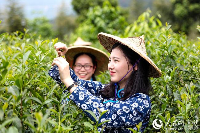 """福建安溪:推进茶业供给侧改革 走好茶产业""""二次腾飞""""长征路"""