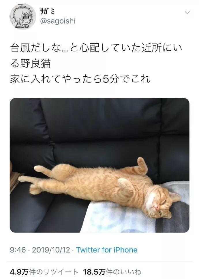 推主家之前被台风刮坏的纱窗没修,结果这次刮来了一只猫…