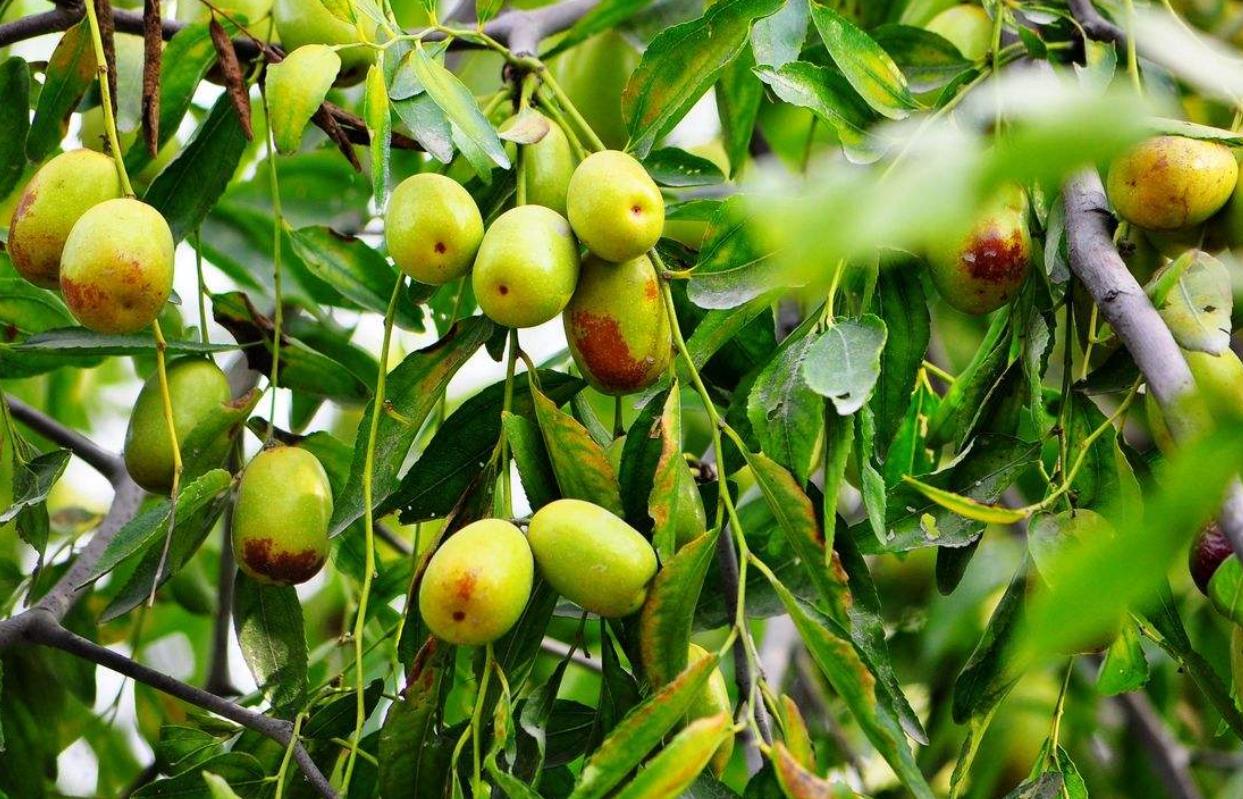 冷天最适合买的水果,养颜养胃还养肝,告诉家人买买