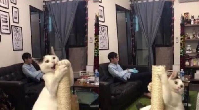 主人看电视无视猫咪,猫咪跳钢管舞引起注意,却被拍成视频走红!