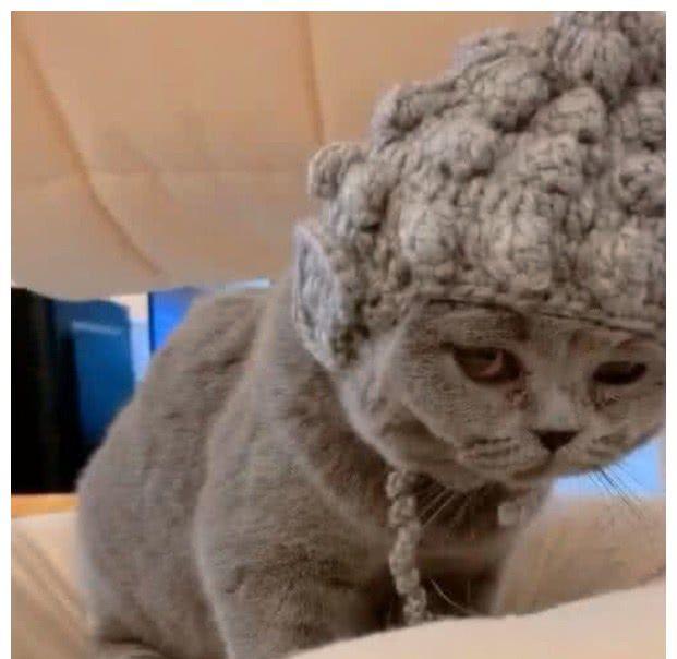 主人觉得猫咪眼神太凶,给它定制佛系帽子后,意外收获经典