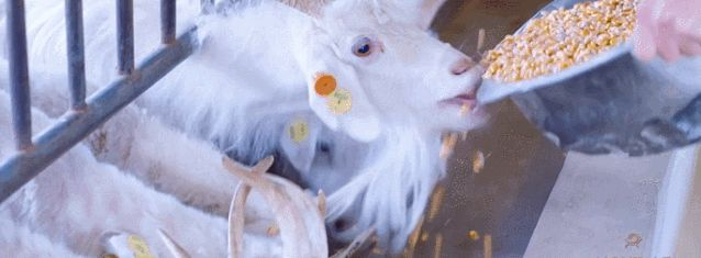 红太羊绒本地产业强势入驻榆林市人民大厦,榆林人民有福了