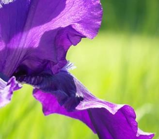 五针松盆景盆土的配制方法,一般采用山泥的混合营养土