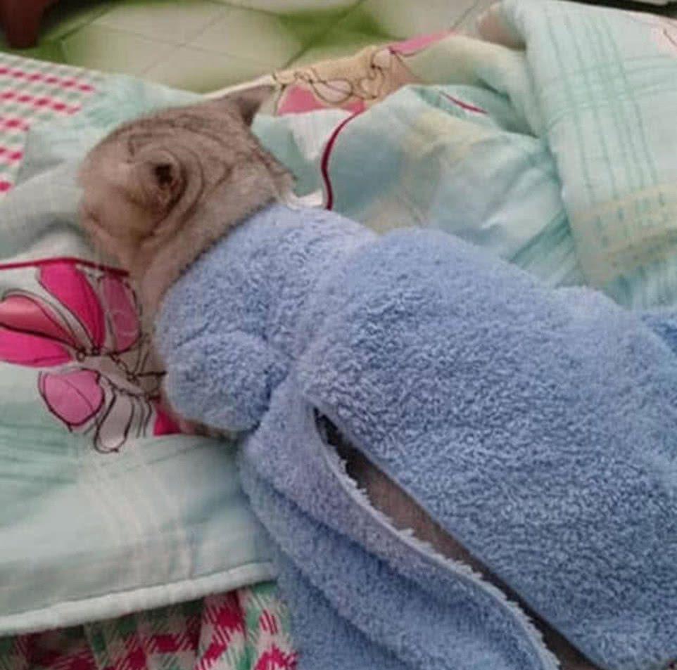 主人担心猫咪冬天冷,机灵打起毛巾主意,看到成品捂嘴笑了!