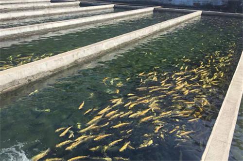 淄博市畜牧渔业服务中心对水产品进行抽检
