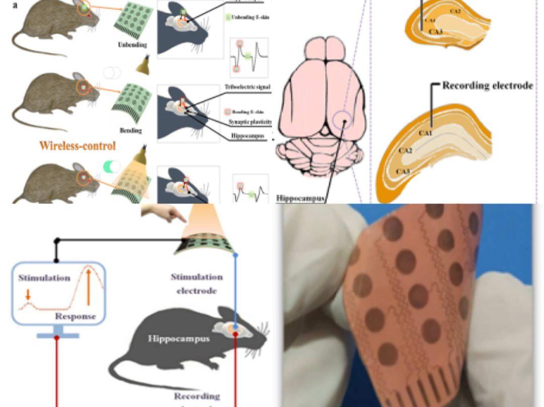 深圳先进院:用于神经突触可塑性表征的无线电子皮肤神经刺激系统