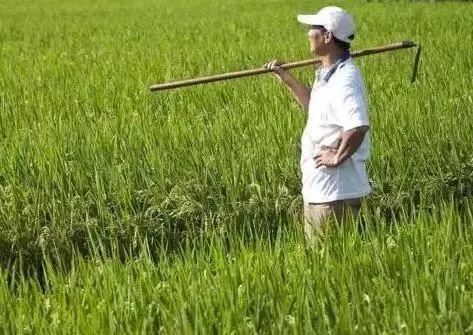 明年的农业补贴有五类人可以领?三类人不能领?你自己符合吗?