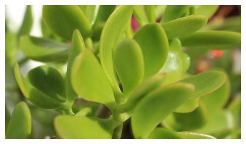 这几种绿植鲜花好看又好养,养在室内也存活,了解一下吧