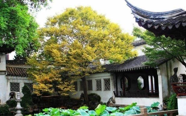 苏州市资讯|苏州园林,你绝对不能错过的美景