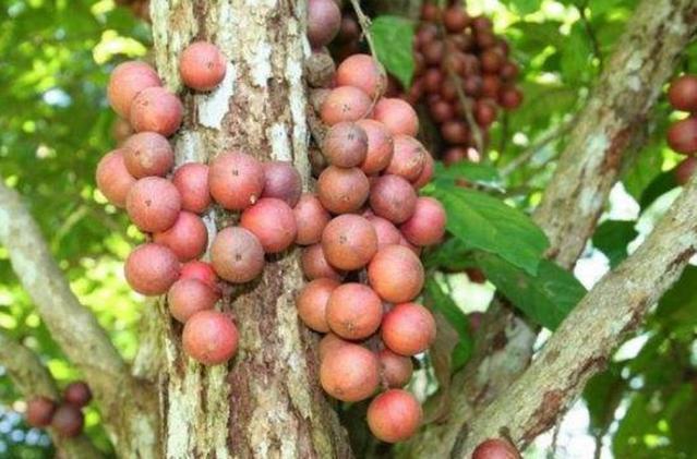 ?最冷门的7种南方水果,北方人可能只认识2种,你吃过吗?