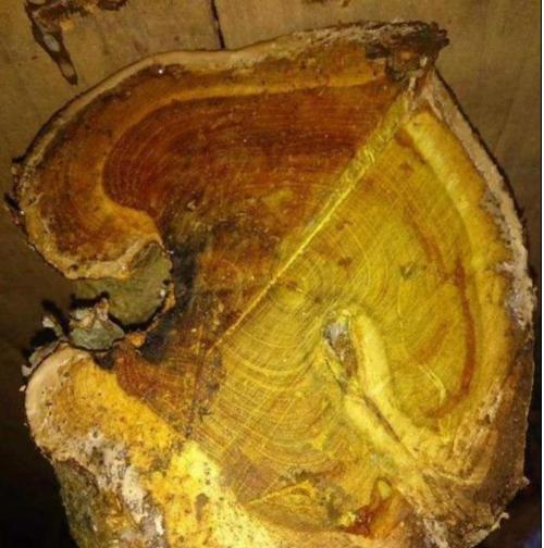 在农村不起眼的几种树木,是很好的硬木材料,来看看你认识几种