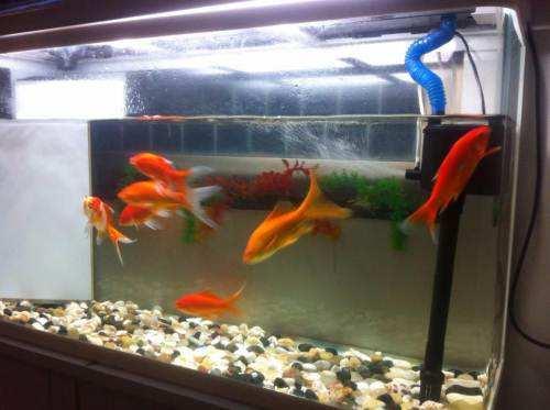 鱼缸水泵的选择