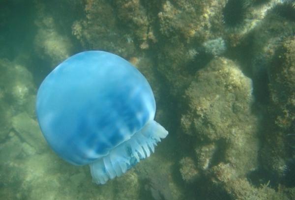"""男子见海面漂浮大量蓝色""""水晶球"""",捞上来一看,连忙跑去医院"""