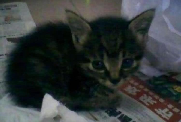 捡到一只小野猫送给闺蜜,一年后再见笑喷了:这吃的饲料?