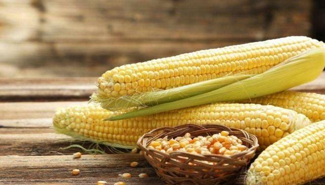 小蓉蓉说三农:肉鸭所需的玉米饲料