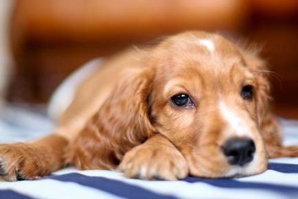 宠物的饲料该如何挑选,怎样才算是正确的呢,看完之后涨知识了