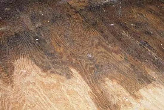 WHAT木地板泡水了憋慌
