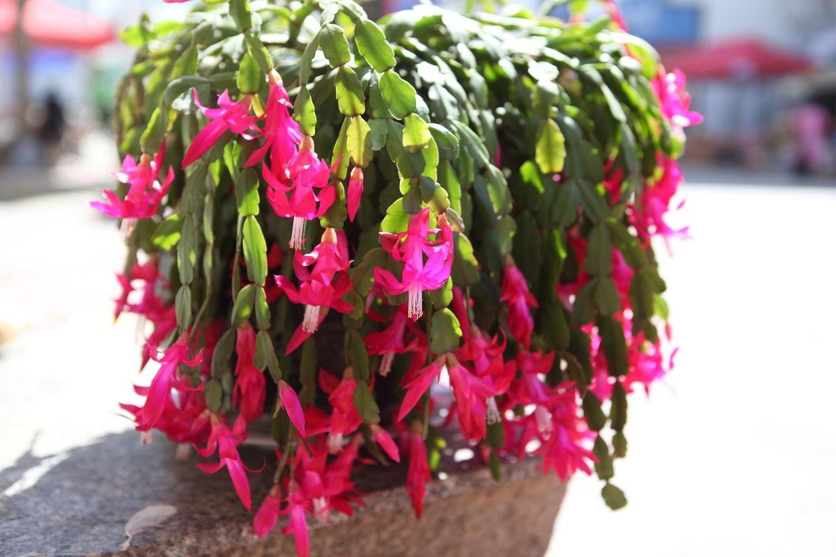这几种花,冬天要控制浇水,不然养不好!..
