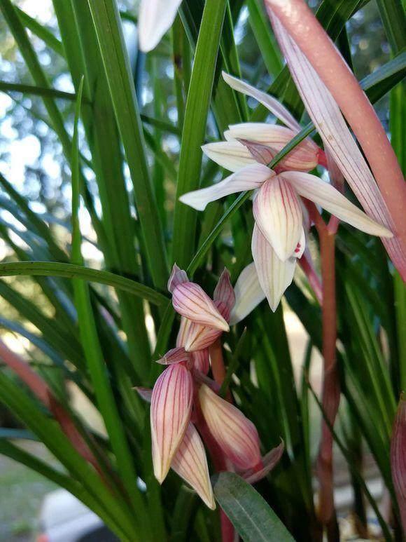 养护兰花,学会用2种粉末,来年开花上100朵