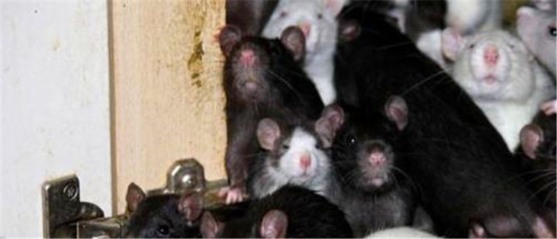 家中一年无人,宠物鼠竟然折腾出这么大的动静来,真心觉得恐怖