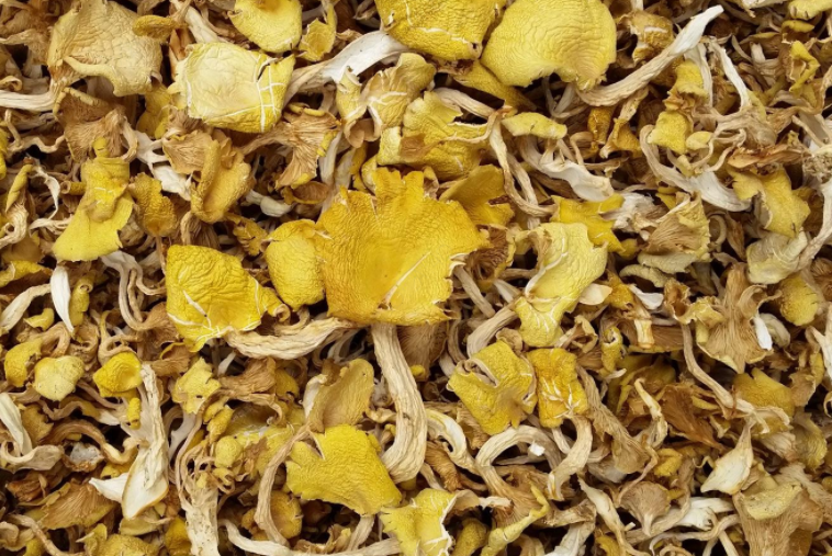 农村一种看起来有毒的蘑菇,没想现在百元一斤,每天可以赚千元