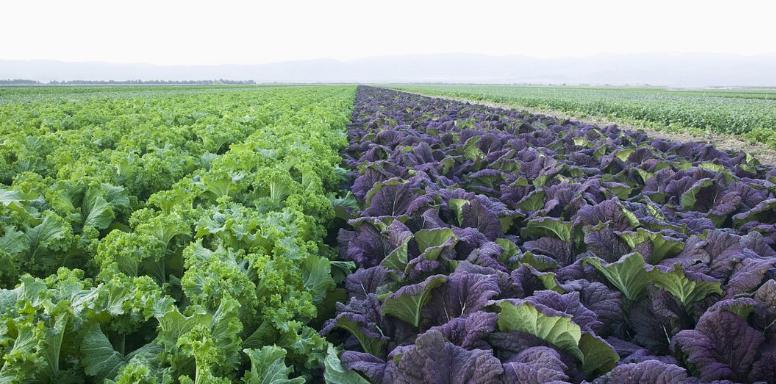 这种植物用来喂养牲畜,当成杂草,殊不知用处很多,今后请珍惜!