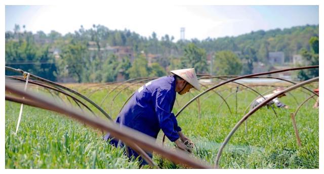 西洋农化服务照片