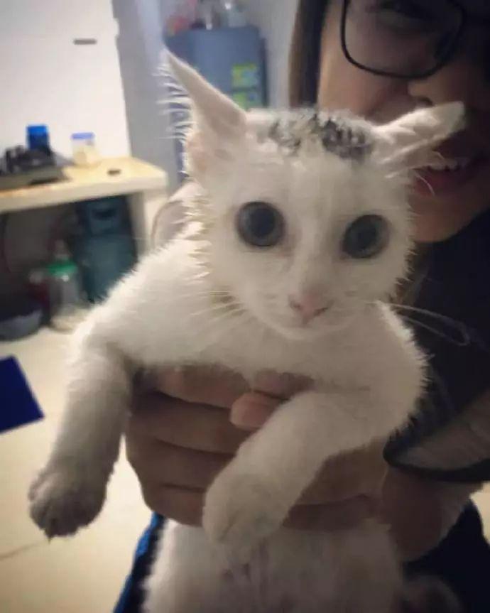 小猫一头扎进了洗手池的过滤网,用力过猛拔不出去……