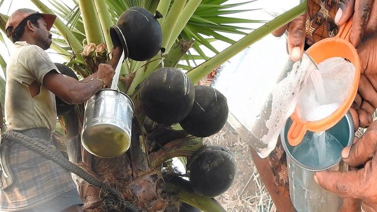 谁说印度人笨?将容器放在树上,就有喝不完的饮料
