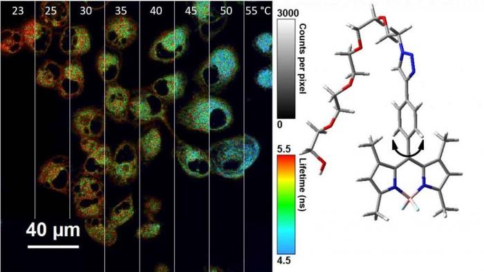 科学家发明纳米温度计 可以测量细胞内温度