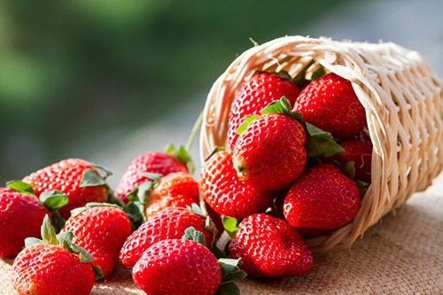 温室草莓病虫害防治,不可忽视的方法