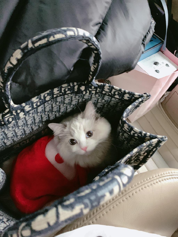 女生包里都是口红化妆品,看到程潇包里的东西时,网友:我服了