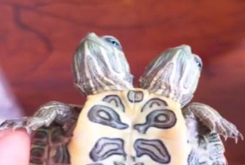 网购了一只宠物龟,买家秀和卖家秀差异太大,收到货后让人吓傻眼