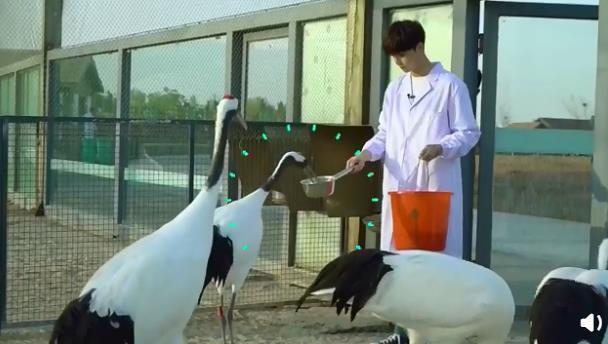 与丹顶鹤亲密接触,陈立农化身正能量男孩,呼吁守护湿地保护自然