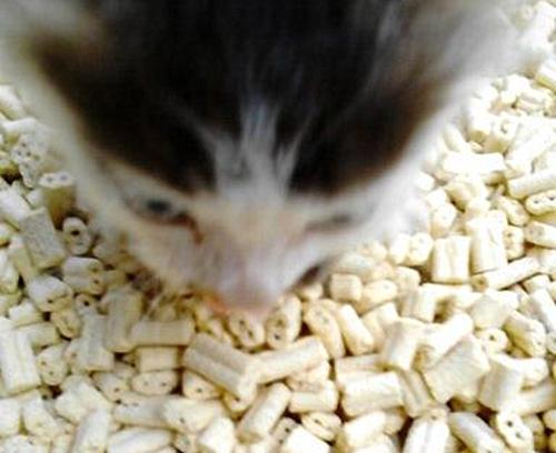 养宠经验:猫咪尿完尿的猫砂怎么冒白色泡沫