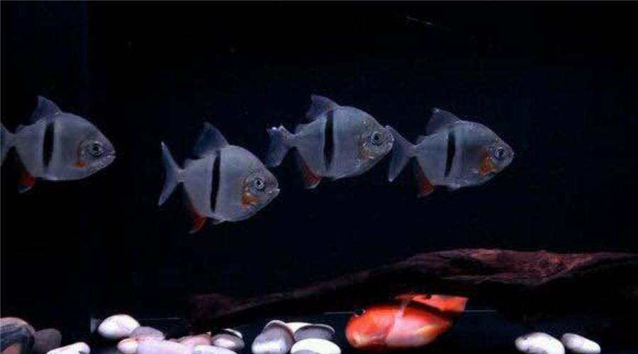 鱼缸硝化细菌三大天敌,一个不起眼,一个很刺眼,还有?.