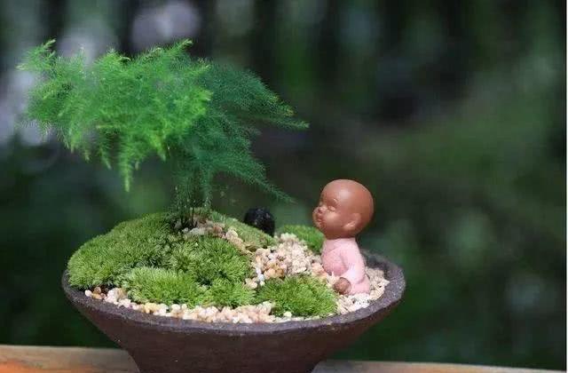 """王大姐养文竹,2月喂次""""药"""",枝条粗壮、叶片翠绿,比亚博体育下载苹果好看"""