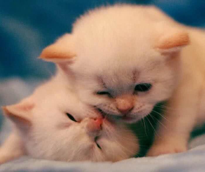 一组超萌的宠物壁纸头像 快来看看有没有你喜欢的,欢迎抱走哦