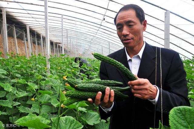 每天分享两种常见的蔬菜生长环境参数及种植要点,温室调节好帮手